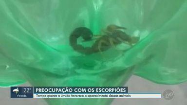Escorpiões preocupam moradores do Jardim Rossim, em Campinas - População do bairro reclama do descarte irregular de entulho, prática que favorece o aparecimento de escorpiões.