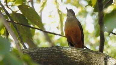 Globo Rural – Edição de 29/12/2019 - Programa traz reportagem especial sobre os pássaros do Instituto Butantan em São Paulo e sobre turismo de observação de aves. Tem ainda notícias sobre o preço do sêmen para inseminação artificial, a situação da BR-163 no Pará e mais notícias do campo.
