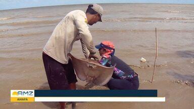 Pesquisa inédita na costa do Amapá quer registrar novas espécies de arraias e tubarões - Pesquisa inédita na costa do Amapá quer registrar novas espécies de arraias e tubarões