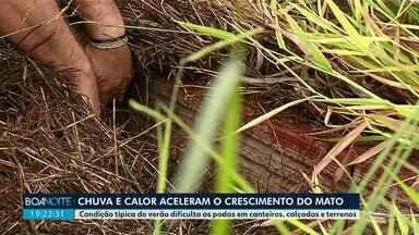 Chuva e calor aceleram o crescimento do mato - Condição típica do verão dificulta as podas em canteiros, calçadas e terrenos