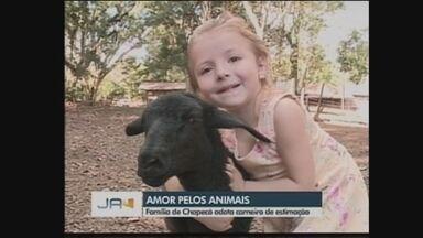 Família de Chapecó adota carneiro de estimação; conheça - Família de Chapecó adota carneiro de estimação; conheça