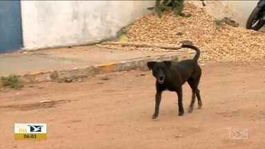 Envenenamento de cães revolta moradores em Imperatriz - Três animais foram vítimas desse crime no mesmo bairro há poucos dias e a suspeita é de que tenha sido um vizinho que estaria incomodado.