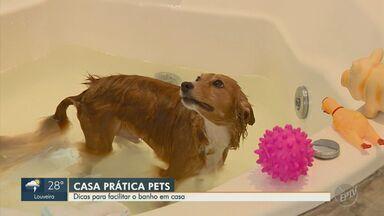 Veja dicas de como dar banho nos animais de estimação em casa - Confira alguns truques para facilitar essa tarefa.