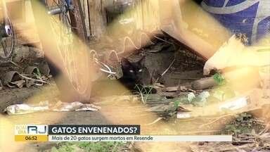Mais de 20 gatos aparecem mortos com sinais de envenenamento em Resende - Voluntários de uma ONG registraram caso na delegacia.