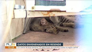 Número de gatos envenenados preocupa moradores de Resende - Segundo eles, 23 gatos foram encontrados mortos na região centra da cidade.