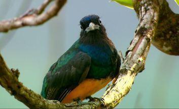 Admirador das aves do Espírito Santo - Guia de observação de comunidade quilombola ensina crianças a cuidar da natureza através de passarinhadas.