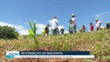 Recuperação de nascentes - Voluntários plantam 600 mudas de árvores próximo à nascentes