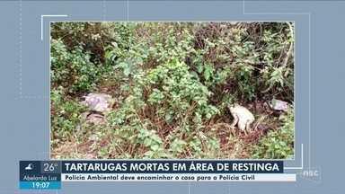 Tartarugas marinhas são encontradas mortas em Barra Velha - Tartarugas marinhas são encontradas mortas em Barra Velha