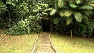 Trilhas são algumas das atrações do Parque Municipal do Bororé - São, ao todo, três trilhas dentro do parque. As trilhas são fáceis e leves, indicadas para todas as idades.