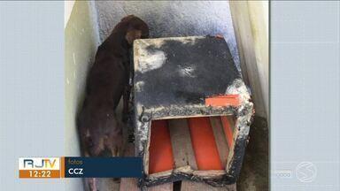 Cachorros que viviam em situação de maus-tratos são resgatados em Resende - Animais eram mantido em um local com condições precárias em uma casa no bairro Fazenda da Barra III. Dono da residência foi levado para a delegacia.