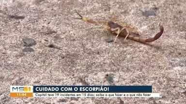 Campo Grande teve 19 incidentes com escorpião em 15 dias - Saiba o que fazer e o que não fazer