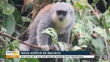 Pesquisadores identificam novas espécies de macacos em MT - Pesquisadores identificam novas espécies de macacos em MT.