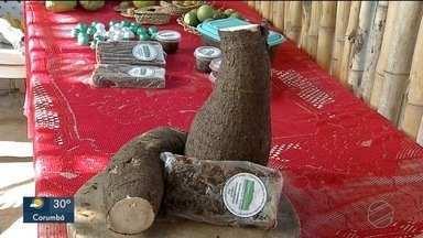 Ana Maria Braga conhece o doce de jaracatiá - Uma iguaria produzida em uma área de preservação de Ladário