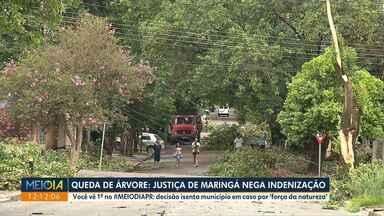 Queda de árvore: Justiça de Maringá nega indenização - Decisão é para caso em que árvore foi considerada sadia.