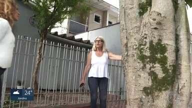 Prefeitura de São Paulo faz pesquisa on line sobre as árvores da capital - Os dados serão usados na elaboração de um plano de arborização.