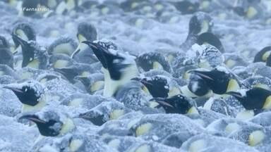 Dinastias: a luta do pinguim imperador para salvar filhotes durante tempestade de neve - A novela da vida animal chega no continente gelado, durante a temporada das tempestades de neve.