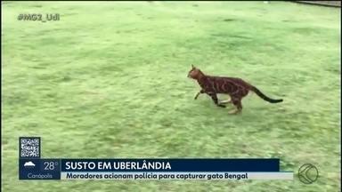 Gato é confundido com jaguatirica e assusta moradores de condomínio de Uberlândia - A Polícia Militar de Meio Ambiente chegou a ser acionada para capturar o animal, que estava debaixo de um carro.