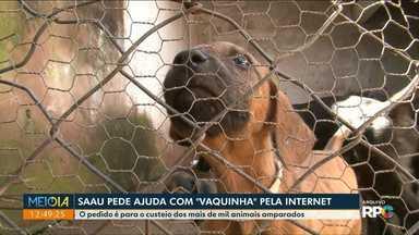 Entidade de Umuarama pede ajuda para manter trabalho com animais - Saau tem conta de R$ 11 mil e pede que população colabore com vaquinha virtual.