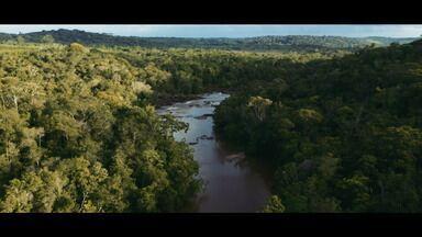 Bahia ganha cinco novas reservas em propriedades particulares - Todas as áreas ficam no litoral norte.