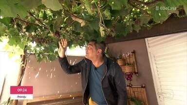 'Meu Pé de Fruta': Zeca Camargo visita moradora que planta uva em casa - Parreira que demorou pouco mais de um ano para crescer dá muitos cachos de uva e é o xodó da família