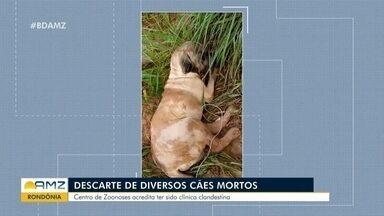 Mortes de animais é investigada em RO - Mortes de animais é investigada em RO