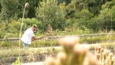 Morador toma a iniciativa e roça matagal da Rota do Sol, em Caxias do Sul - O mato toma conta dos canteiros da RS-453, próximo ao Desvio Rizzo.
