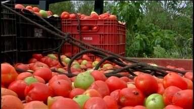 Produtores rurais descartam tomates às margens de estrada em Ribeirão Branco - Produtores rurais têm descartado tomates às margens de estrada em Ribeirão Branco (SP).