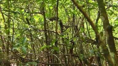 Globo Repórter - Floresta Amazônica - 28/02/2020 - Com apresentação de Glória Maria e Sandra Annenberg, o 'Globo Repórter' é o jornalístico documental que vai ao ar nas noites de sexta-feira.