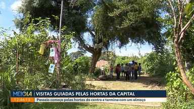 Grupo faz passeio por hortas de Curitiba - A visita guiada terminou com um almoço.