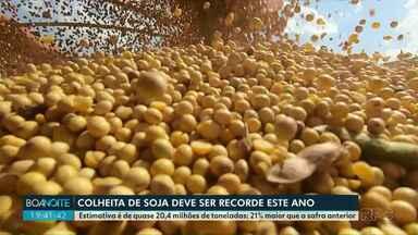 Colheita de soja deve ser recorde este ano no Paraná - Estimativa é de quase 20,4 milhões de toneladas, 21% maior que a safra anterior.