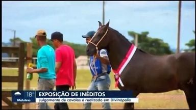 Divinaexpo: exposição de cavalos mangalarga machador movimenta parque em Divinópolis - Exposição chegou à 7ª edição neste ano. Programação celebra 50 anos da festa.
