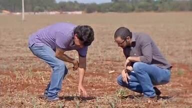 Produtores de milho do sul do estado se preocupam com efeitos da estiagem sobre a safrinha - Produtores de milho do sul do estado se preocupam com efeitos da estiagem sobre a safrinha