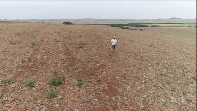 Seca atinge em cheio o RS e produtores pedem ajuda do governo - Prejuízos afetam da produção de soja até a pecuária de leite. Estudos apontam aquecimento global como motivo.