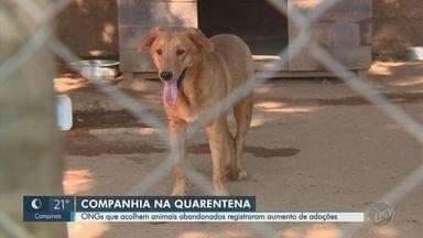 ONGs de proteção animal em Campinas registram alta de 54% em pedidos para adoção - Busca por companhia de pets aumentou no período de enfrentamento ao novo coronavírus, segundo entidades.