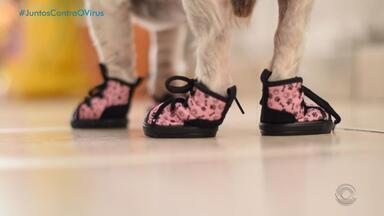 Veja dicas para manter os cuidados de higiene com os animais de estimação - Assista ao vídeo.