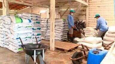 Produtores de camarão do Piauí buscam alternativas para escoar produção - Produtores de camarão do Piauí buscam alternativas para escoar produção