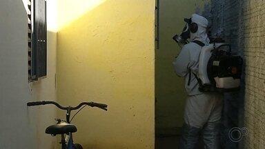 Palmital intensifica combate para conter avanço da dengue - O número de casos de dengue explodiu em Palmital, com mais de 1,3 mil casos na cidade com pouco mais de 22 mil habitantes. Confira o balanço dos casos de dengue no centro-oeste paulista, incluindo os casos de mortes.