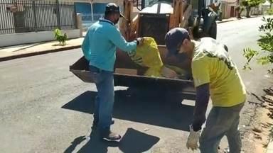 Pereira Barreto faz mutirão de limpeza para combater o mosquito Aedes aegypti - A Prefeitura de Pereira Barreto (SP) está fazendo um mutirão de limpeza pra recolher materiais que possam acumular água e servir de criadouro do mosquito aedes aegypti.