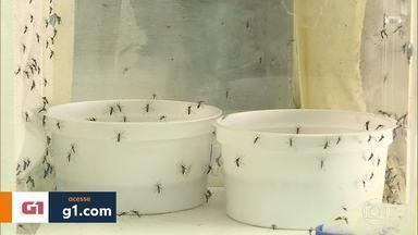 Mais de 64 mil casos de Dengue estão sendo investigados em MG - Dados foram divulgados pela Secretaria Estadual de Saúde. Cuidados para evitar a proliferação do Aedes Aegypti devem ser intensificados.