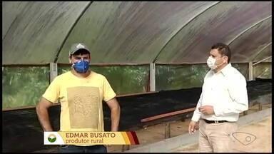 Colheita do café Arábica deve demorar mais algumas semanas em lavouras do ES - Ubaldino Saraiva e Cesar Kroling do Incaper estiveram esta semana na propriedade do Edmar Busato que produz café de qualidade para saber a expectativa para esta safra.