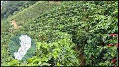Ministério da Agricultura e Centro do Comércio de Café preveem boa safra do café no ES - Se todos os fatores se confirmarem, valor da safra deve ficar entre R$ 4,9 bilhões e R$ 5,8 bilhões