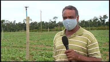 Produtores rurais de Linhares temem perder a colheita por causa de pandemia de coronavírus - Eles fazem parte de uma cooperativa que vende produção para a merenda escolar.