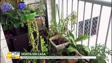 Verdejando dá dicas para fazer horta em casa - Especialistas dizem que ter contato com plantas, com cheiros e cores relaxam, acalmam e melhoram o sono. É terapêutico e indicado para qualquer idade.
