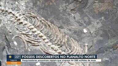 Com seca em SC, fósseis de milhões de ano são encontrados no Norte de SC - Com seca em SC, fósseis de milhões de ano são encontrados no Norte de SC