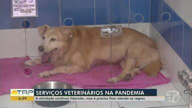 Atendimentos veterinários são liberados durante 'Lockdown' em Santarém - A atividade é considerada essencial.