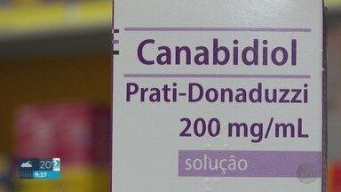 Canabidiol produzido a partir de pesquisa da USP de Ribeirão Preto chega às farmácias - Medicamento serve para o tratamento de crianças com epilepsia grave e é extraído da maconha.