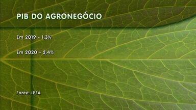 Agronegócio é um dos poucos setores que terão crescimento mesmo com pandemia - Cuidados com a higiene foram redobrados no setor.
