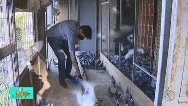 Conheça a história por trás do esporte de criadores de pombo-correio em Divinópolis - Columbofilia é a arte de criar pombos-correio. Eles são treinados para disputar provas de distância e velocidade.