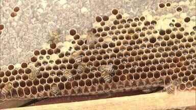Conheça o trabalho da produção de abelhas em um Apiário no Vale Verde, distrito de Ipaba - Região fica localizada na Mata Atlântica e favorece para a produção de abelhas.