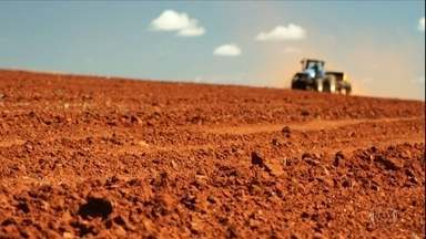 Produtores de trigo do DF apostam em alta do dólar para melhorar rendimentos - Plantio em 2020 deve alcançar 3.500 hectares. Lavoura da região precisa ser irrigada, já que chuvas só chegam em setembro.